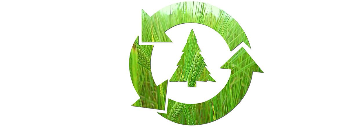 Recyclage des sapins