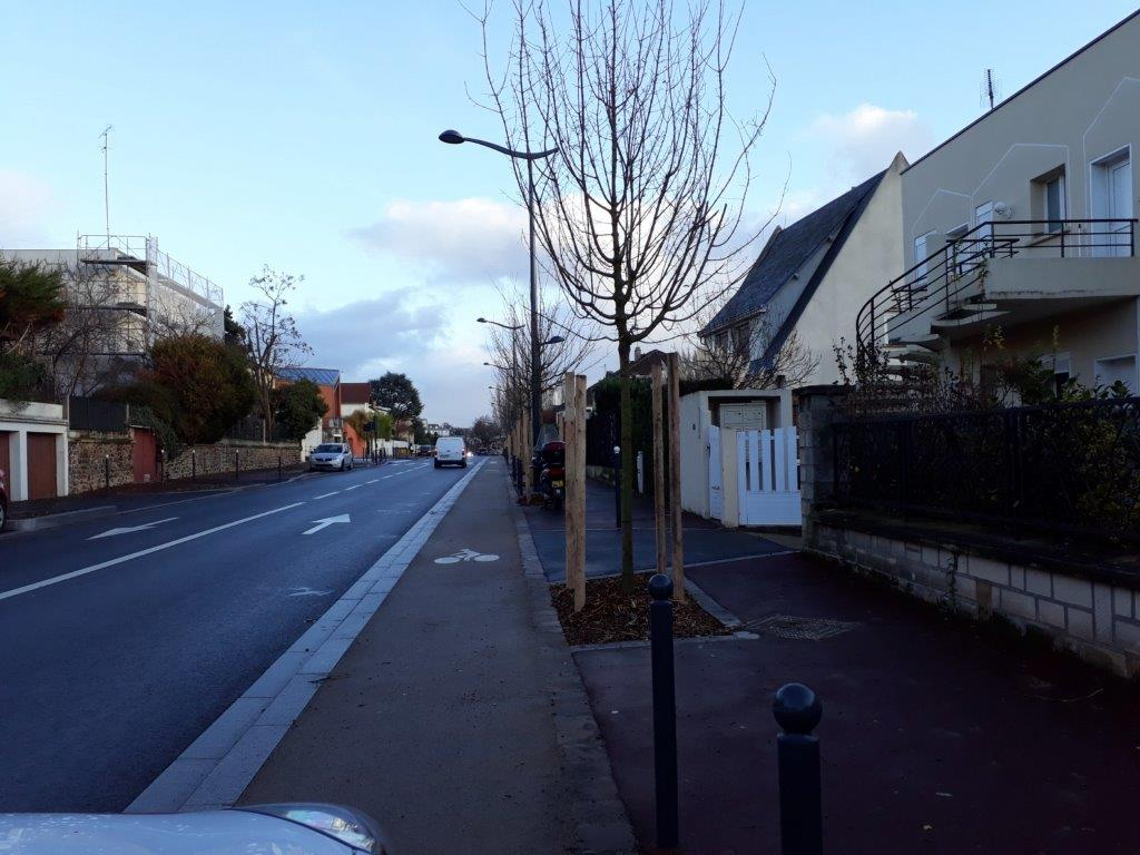 Plantations sur l'avenue Jean Moulin